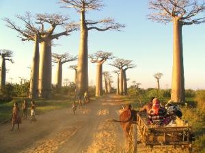 Camino África