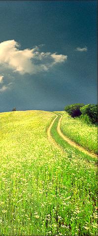 camino en flores