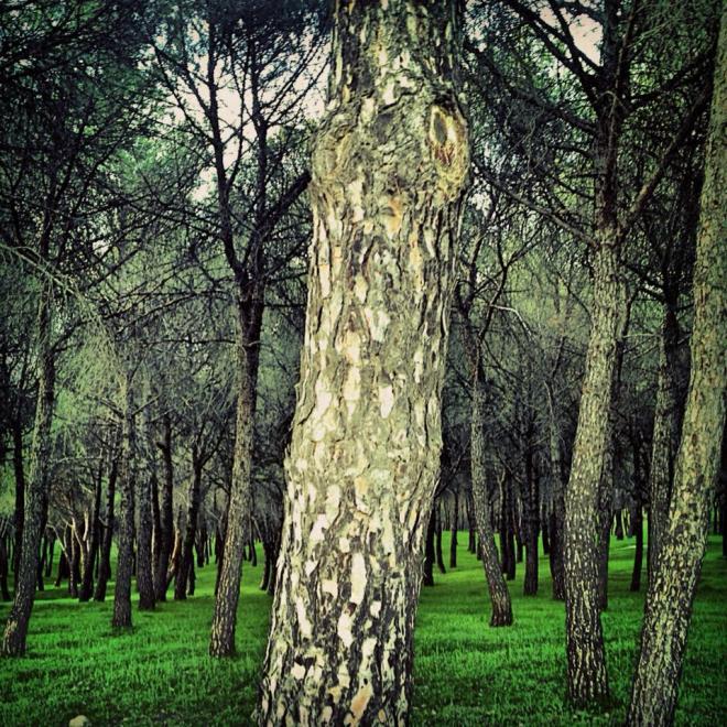 bosque odres nuevos